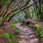 Urwald auf Teneriffa