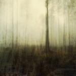 Waldstück bei Summt